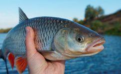 Balık Hakkında Bilmemiz Gerekenler