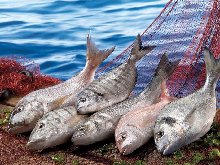 Bakanlığın Balık Tüketimi İçin Hazırladığı Kamu Spotu