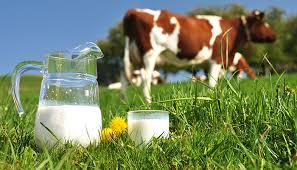 Geçtiğimiz Yılın Aralık Ayında 130 Bin Ton İçme Sütü Üretildi