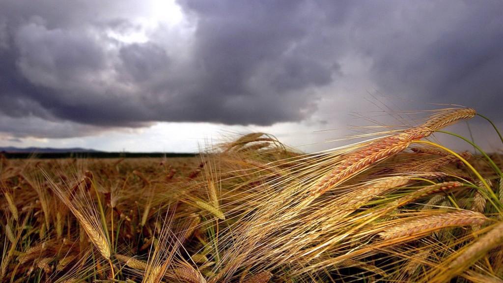 Tarım- ÜFE Haziran Ayında %1,04 Arttı