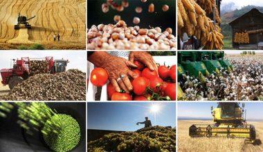 Bitkisel Üretimin En Önemli Ürünü Buğday oldu