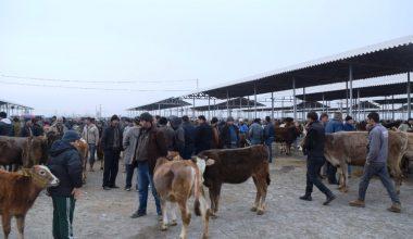 Şap karantinası altında bulunan hayvan pazarı yeniden açıldı