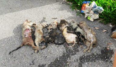 – Çöp konteynerinde bulunan 6 ölü kedi için soruşturma başlatıldı
