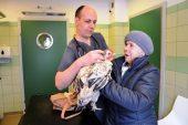 Polonya'da tavuğa protez bacak