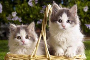 Bu iki kedinin dostluğu ne görüldü nede duyuldu!