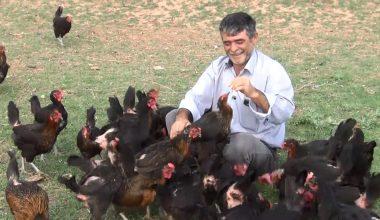 Oğlu yumurta yesin diye tavuk çiftliği kurdu