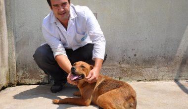 Hayvanseverleri ayağa kaldıran şiddete 625 lira ceza