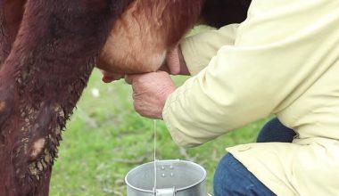 Türkiye'de Çiğ Süt Sorunu ve Ardındaki Gerçekler