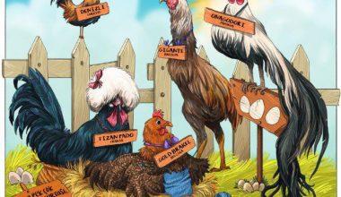 Tavuklar ve Yumurtaları Sergisi Eskişehir'de