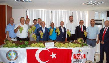 Salihli'de sezonun ilk üzümü kilosu 170 TL'den satıldı