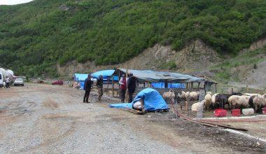Sığır çiceği hastalığı büyük baş hayanları vurdu: 54 kurbanlık telef edildi