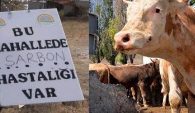 Ölmek üzere olan hayvanların etlerine şüphe ile yaklaşın