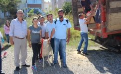 Kırklareli'de 47 adet kıvırcık ırkı damızlık koç dağıtıldı