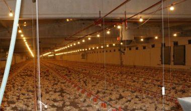 Erzincan'da etlik piliç yetiştiriciliği artıyor