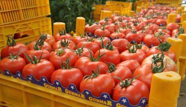 Eylül ayının zam şampiyonu domates oldu