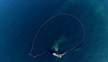 Hamsi avı havadan böyle görüntülendi