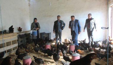 Iğdır'da kanatlı işletme sayısı artıyor
