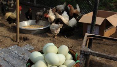Yumurta ihracatı ilk on ayda yüzde 18 arttı