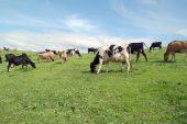 41 ildeki hayvancılık yatırımlarına yüzde 50 hibe desteği sağlanacak