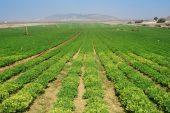 Tarımsal destek miktarı artırıldı