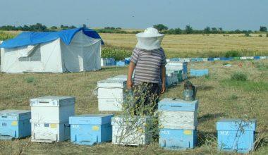 Trakya arısı ile gezginci arılar arasında 5 kilometrelik tampon bölge olacak