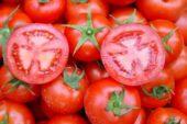 Türk domatesleri Ukrayna'ya alınmadı