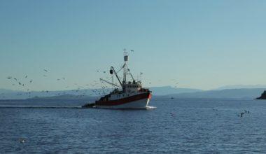 Balıkçılık av sezonu 15 Nisan'da sona eriyor