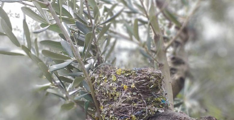 Kuşlar ölmesin diye ağaçlarını budamıyorlar