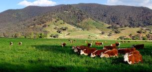 Tarım ve Hayvancılık İçin Belediyelerin Yeri ve Önemi