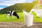 Toplanan inek sütü miktarı Mayıs'ta azaldı