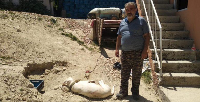 """Bursa'da hamile köpeği """"havlıyor"""" diye tüfekle katlettiler"""