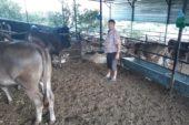 Hayvan yetiştiricileri fiyatlardan dertli