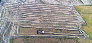 """""""Çeltik hasadı""""nda hedef 350 ton"""