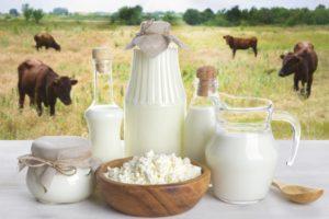 Süt Sığırcılığı İşletmesi Kuracaklara Altın Öneriler