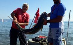Sarıgerme'de 42 kiloluk Akya balığı görenleri şaşırttı