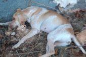Sokak köpeğini işkenceyle öldürdüler
