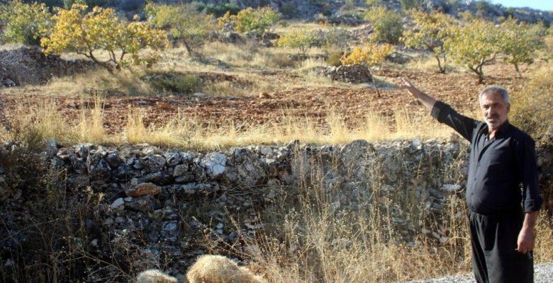Gaziantep'te kurt dehşetinden kaçan 6 koyun halen bulunamadı