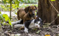 Düzce'de 55 kişiyi kedi ve köpek ısırdı