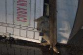 Koyunları taşıyan kamyon devrildi: 8 kuzu telef oldu