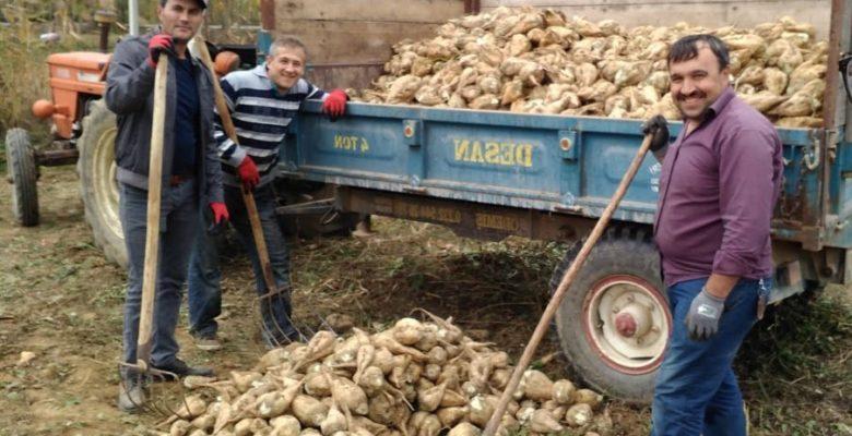 Simav'da şeker pancarı üretimi durma noktasına geldi