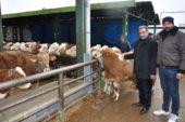 Hayvan üreticileri yem desteği bekliyor