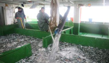 Çanakkale'de su ürünleri denetiminde 256 bin lira ceza