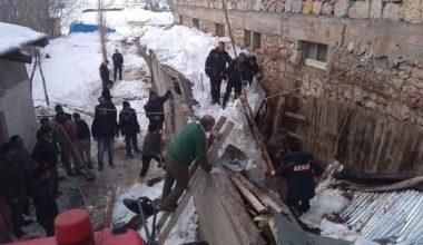 Ahırda, çöken çatının altında kalan danalar kurtarıldı
