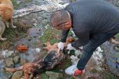 Ormanda vurularak öldürülen 5 köpek bulundu