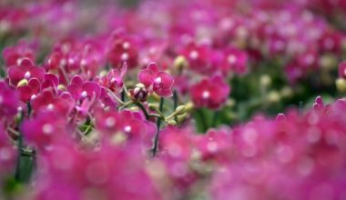 Koronavirüs çiçekçilik sektörünü etkiledi