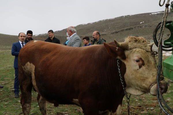 Vanlı çiftçi, en iyi boğasını 'Milli Dayanışma Kampanyası'na bağışladı