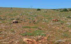 Elazığ'da sağanak ve soğuk: 30 koyun telef oldu
