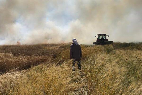 Mardin'de, buğday ekili 30 dönüm alan yandı