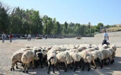 Diyarbakır'da canlı hayvan borsası, yeniden hizmete açıldı