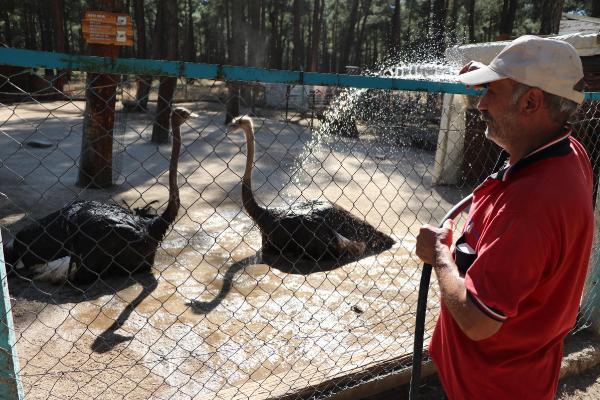 Hayvanlar 40 dereceyi aşan sıcakta hortumla su tutularak serinletiliyor